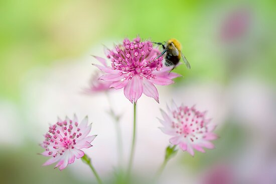 Bee Happy by Jacky Parker