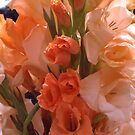 Glads . . . domesticated cultivar beauty by evon ski