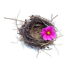 Empty nest.... by Yool