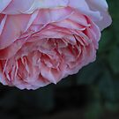 pink petal shower by Christine Ford
