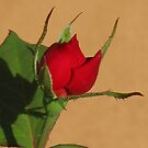 the red rose series #1 by Christine Ford