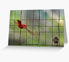 First Flying Lesson, Summer Tanagers Greeting Card