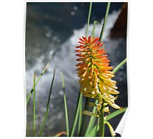 flower spike flowing water Poster