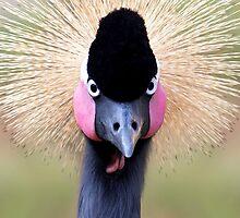 West African Crowned Crane by Janet Fikar