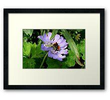 Buzzing around in the garden Framed Print