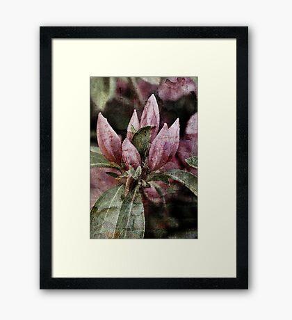 Textured Bloom Framed Print