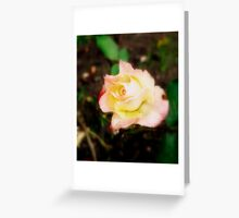 Soft Rose  Greeting Card