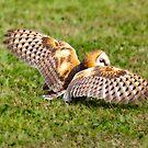 Barn Owl by Yannik Hay