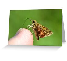 A Grass Skipper Cleaning Under My Fingernails Greeting Card
