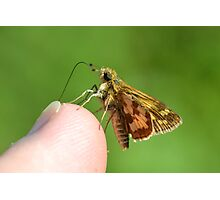 A Grass Skipper Cleaning Under My Fingernails Photographic Print