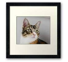 Mallory Moo Framed Print
