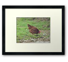 The Hen behind the Wire!!! Framed Print