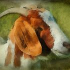 Goat by Eve Parry