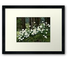 Sheltering daisies. Framed Print