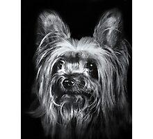 Barney Photographic Print