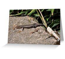 Maymont Lizard Greeting Card