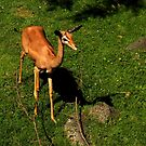 Stop Calling Me Bambi, Or Else !!! by artisandelimage