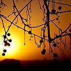 Winter Sunrise, Quirindi NSW by lu138