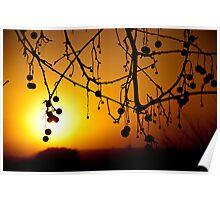 Winter Sunrise, Quirindi NSW Poster