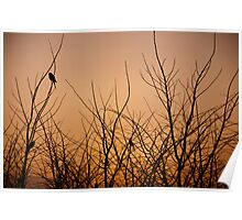 Birds in the dead Winter trees at sunrise, Quirindi, NSW Poster