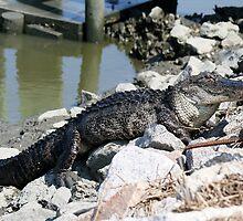 I'll take My Gator on the Rocks by Paulette1021