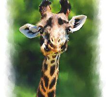 Wildlife African Giraffe Portrait by Michael Greenaway