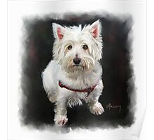 West Highland White Terrier Pet Portrait Poster