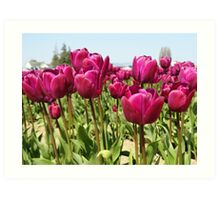 Tulip Time in the Spring Art Print