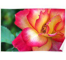 Dynamic Bloom 2 Poster