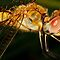 hot dragon fly by amar singh