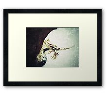 Pacatus Gold Dragon Framed Print