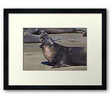 Beach Master Framed Print
