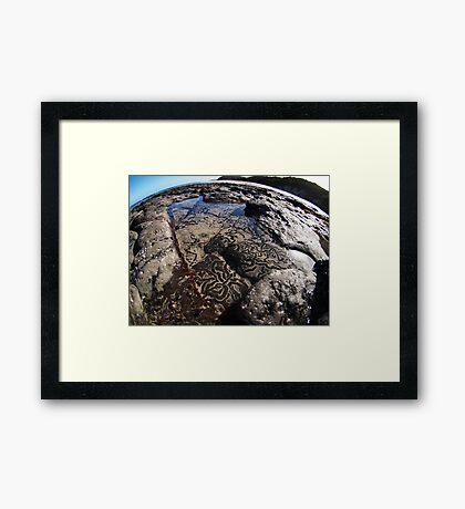 SnailTrail Framed Print