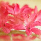Drowning in Pink by Margi