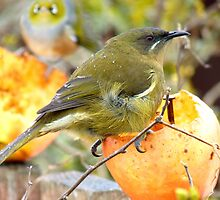 There Appears To Be A Bit Of A Tail Wind Today!!... - Bellbird - NZ by AndreaEL