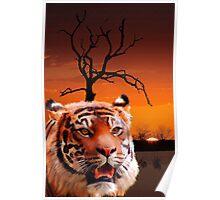 African Tiger wildlife Portrait Poster