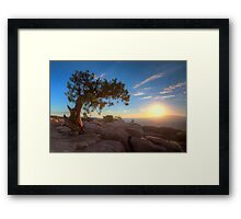 The Old Juniper Tree Framed Print