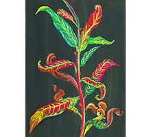 Fireweed Leaves in Autumn Photographic Print