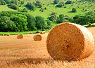 Harvest - West Sussex by Colin J Williams Photography