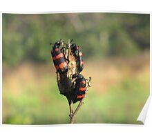 beetles Poster