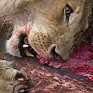 Lion's Meal by Henry Jager