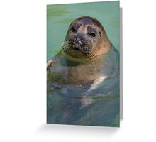 sea lion at the zoo Greeting Card