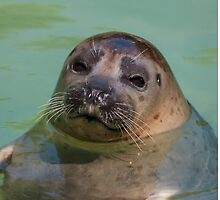 sea lion at the zoo by spetenfia