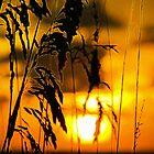 Golden Oats by Michael Damanski