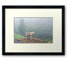 Through the fog Framed Print
