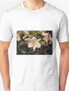 Longwood Gardens Series - 7 T-Shirt