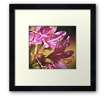 Busy Pinks Framed Print