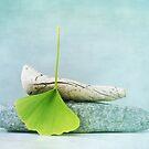 driftwood, stone and a gingko leaf by Priska Wettstein