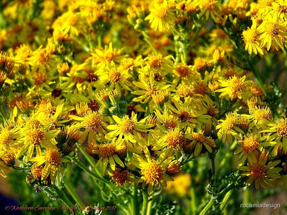 Wild Sunshine (Common Ragwort, Senecioneae Jacobaea) by rocamiadesign