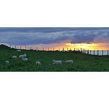 Sheep grazing at sunset by the cliffs near Tudweiliog, Llyn, North Wales Photographic Print